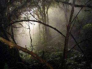 เรื่องลึกลับในป่า